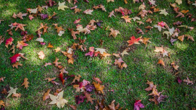 Schönere Freizeit: Tipps für einen schönen Garten