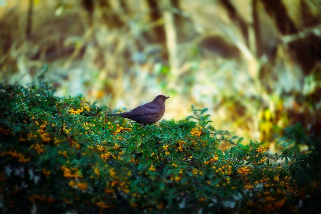 Vogel in der Hecke