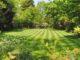 Rasen sähen – aber welchen Rasensamen nutzen?
